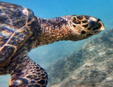 things to do in seychelles bookonboard