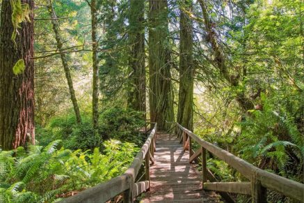 Redwood National Park California bookonboard guide things to do