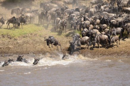 The Great Migration things to do in tanzania bookonboard